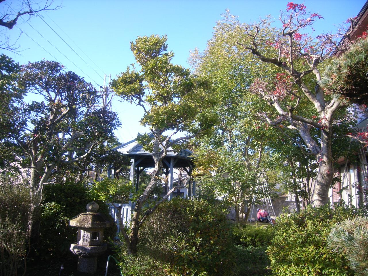 自然風庭園の剪定~四季折々の風が通り抜ける庭~ BEFORE