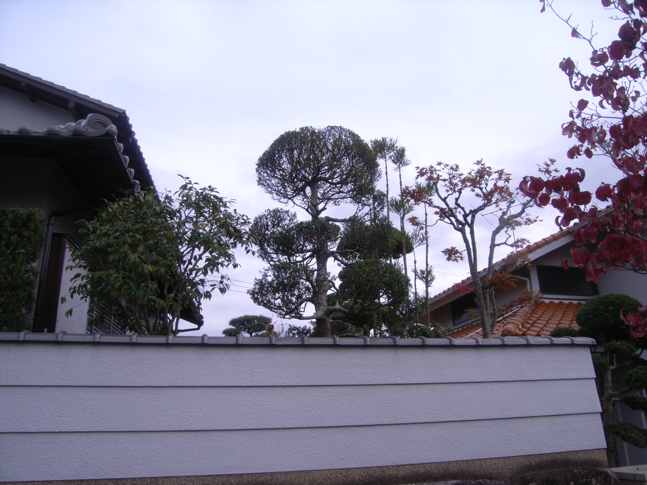 木作り剪定 引き継ぐ日本庭園 AFTER
